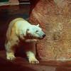 The bear kept going around that pillar, always facing the same direction.