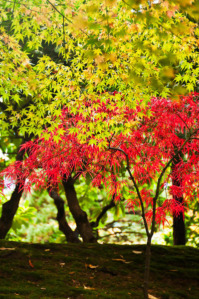 JapaneseGardenAutumn1