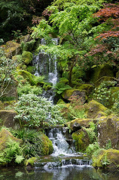 A small waterfal in the rich foliage.