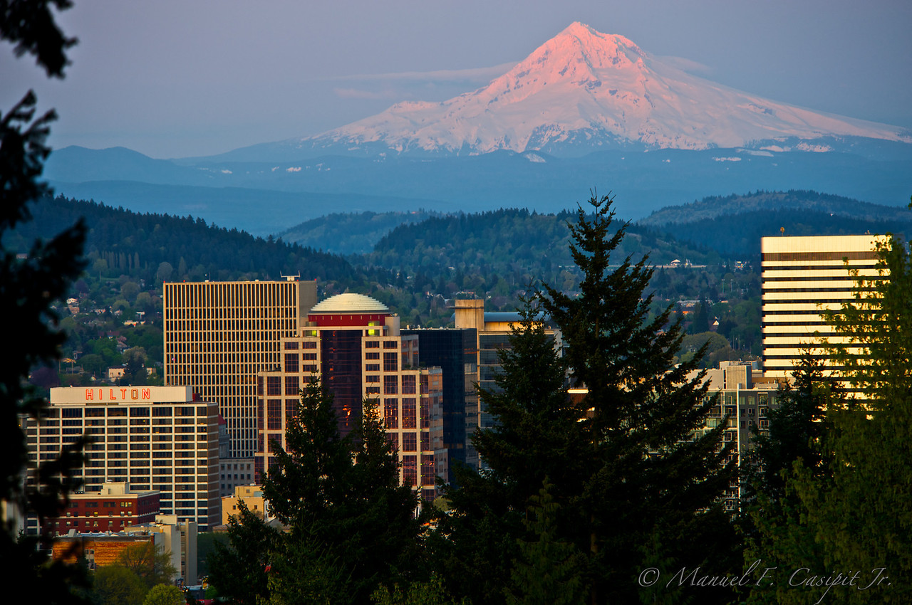 View of Portland and Mt Hood from Portland's Rose Garden