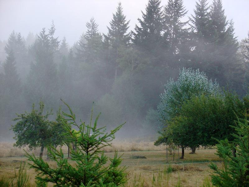 fog swirls along the banks of silver lake