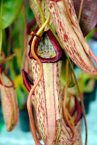 Strange plants at the farmer's market