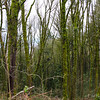 Portland-20140216-31