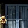 Teddy drying in the sun. Balcony in Porto.