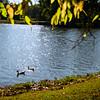 Wintersmith Park, Ada