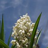 Cactus flowers near Guia