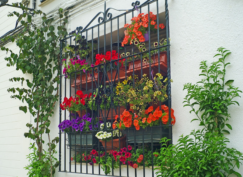 Impressive window boxes in Seville.