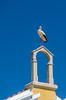 Stork, Main Square Library, Nisa