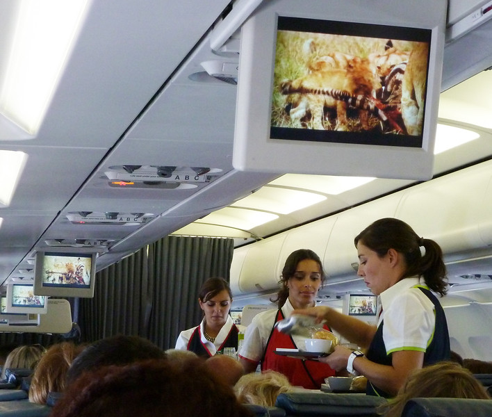 On a flight from Warsaw to Lisbon on TAP (Portugal airlines) they were showing a documentary on Africa on the little screens. The lions had just killed a zebra and were tearing it apart to share with the passengers, I mean pride, while the stewardesses were serving dinner.