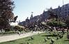 009  Oporto, Avenida Aliados, duiven in park vliegen op