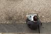 The newspaper reader, Lisbon, Portugal