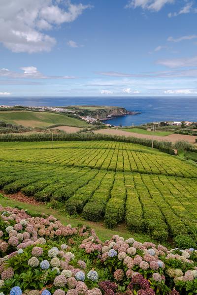 Cha Porto Formoso, Porto Formoso, São Miguel Island, Azores, Portugal
