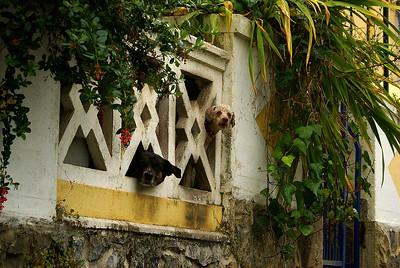 Paikalliset ystävät Sintrassa. - Local friends at Sintra, Portugal, 2007.