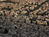 The shadow of the Jebel Qassioun mountain creeps across Damascus, capital of Syria. With a population near six million, the city claims to be one of the oldest continuously inhabited cities in the world. Archeological excavations have uncovered artefacts from the third millenium BC.(Australfoto/Douglas Engle)