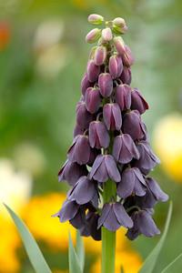 Photofreak. Les Andelys. Flower France.