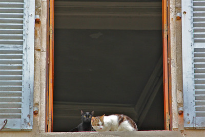 Two cats in a window. Viviers, France.