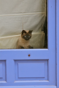 Cat at the French blue door. Viviers, France.