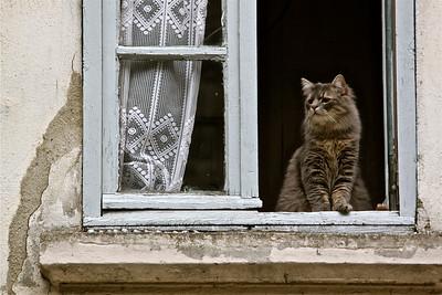 Le Chat tres bon. Tournon, France.