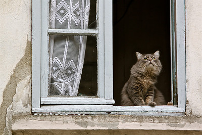 A charming local cat looks for birds from a windowsill. Tournon, France.