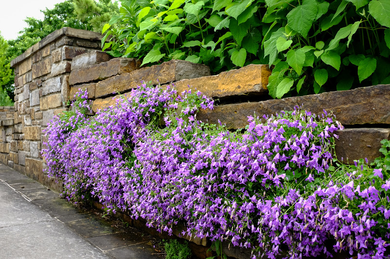 purple_flowers_stone_wall-5040