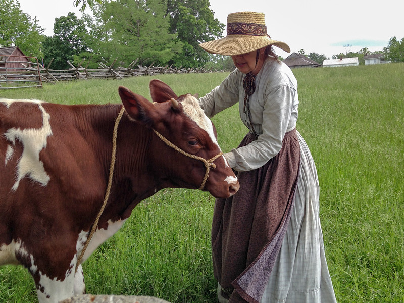 An employee in period costume attends to a cow at Missouri Town 1855 near Lee's Summit , MO. Photo by Rita (iPhone).
