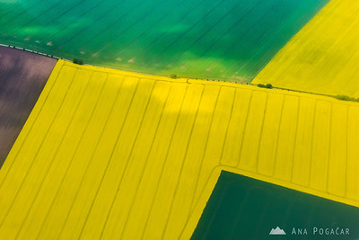 Yellow fields of oil rape just before landing in Prague