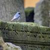 Jewish Cemetery: Red Tail