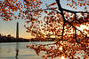Cherry Blossoms at sunrise. Washington D.C. 2009