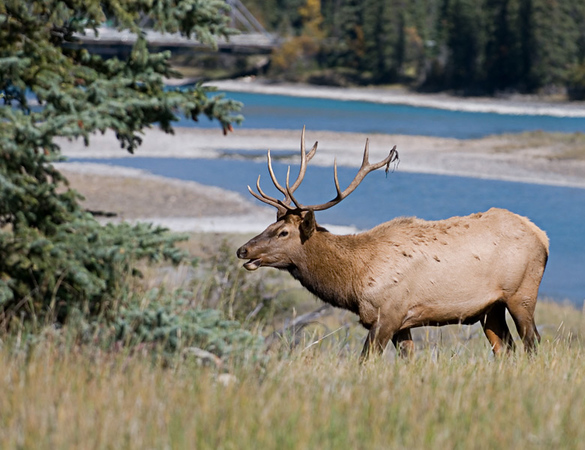 PreShootout - Canadian Rockies