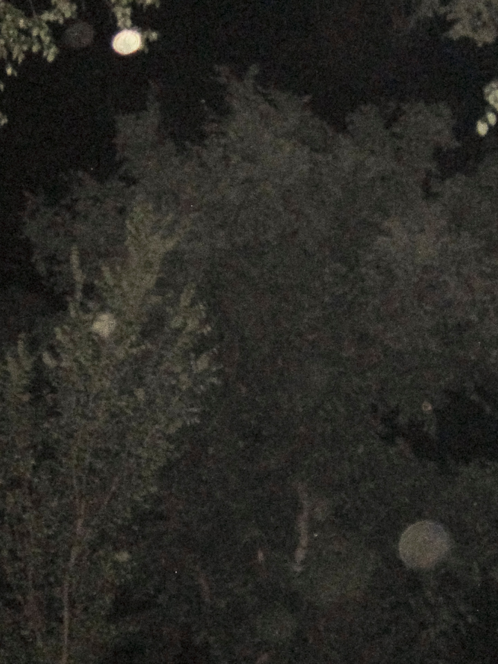 Ghost orbs in trees outside courthouse