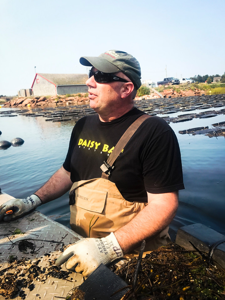 Where to eat in PEI: the island is known for world class oysters like here at Raspberry Point.