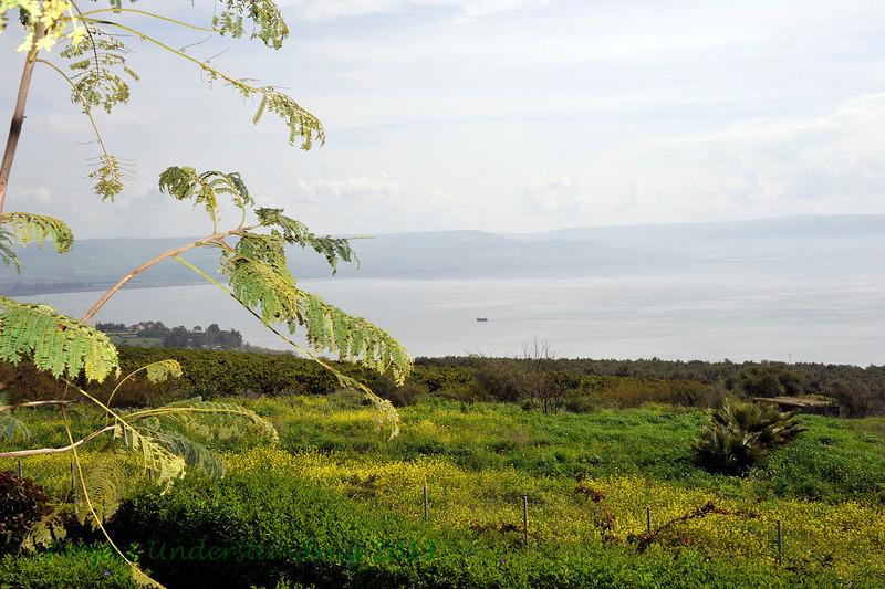 Bucolic scenery along the Sea of Galilee.