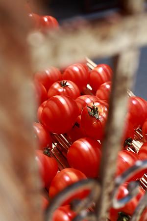Fresh tomatoes - Driving toward Menerbes, Provence, Wednesday May 9, 2007