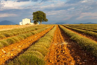 Plateau of Valensole, Provence, France, 2012