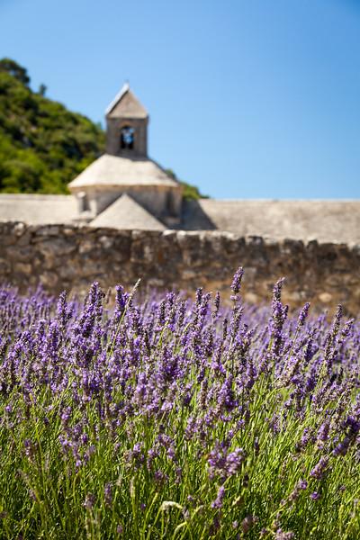 Abbaye de Sénanque, Gordes, Provence, France, 2012