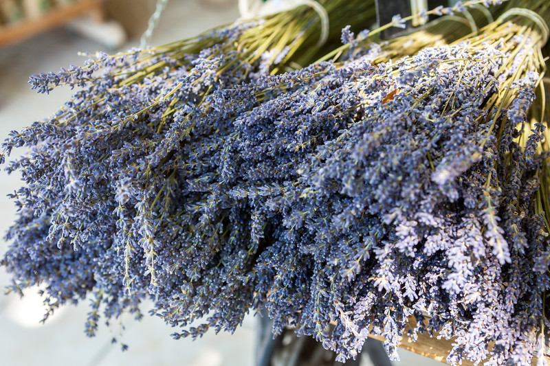 Bouquet of lavender, Fontaine-de-Vaucluse, Provence, France, 2012