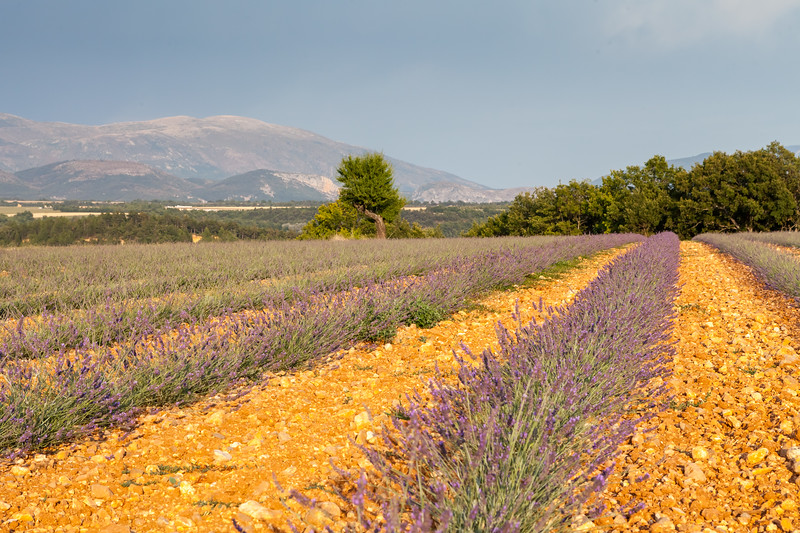 Plateau of Valensole, Provence, France, 2012