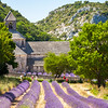 Abbaye de Sénanque with lavender field, near Gordes village, Vaucluse, Provence, France