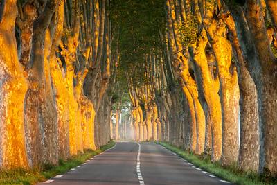 Avenue, Provence, France, 2013