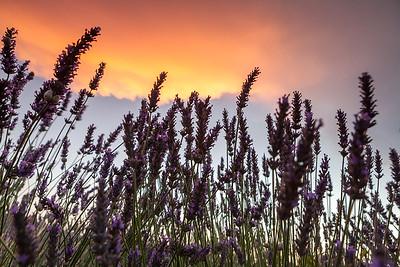 Sunset, Provence, France, 2013
