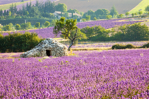 Landscape, Provence, France, 2013