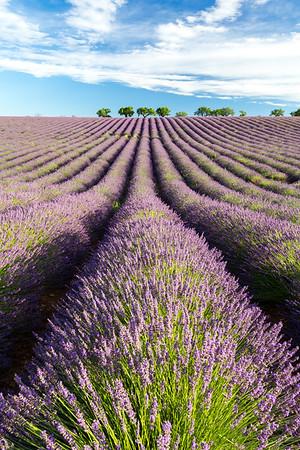 Valensole, Provence, 2017