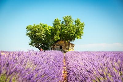 House, Provence, 2017