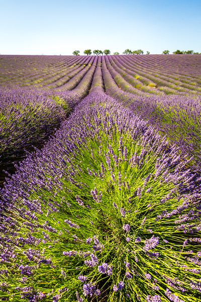Lines, Provence, 2017