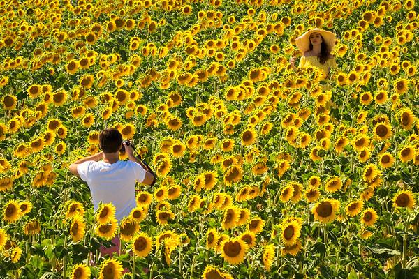 Yellow beauty, Provence, 2017