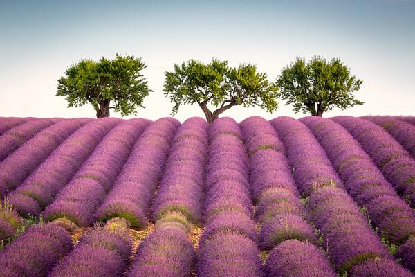 Trees, Provence, 2017