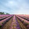 Field, Provence, 2017