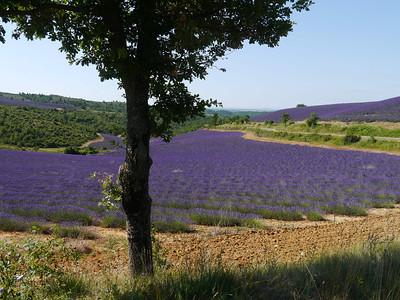 Provence July 2012