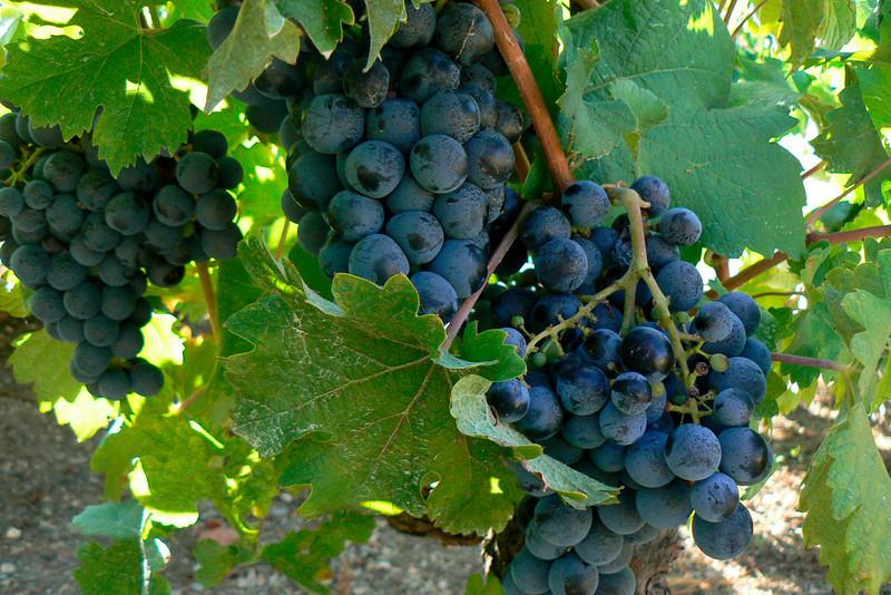 Hostellerie vineyard