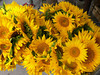 A bouquet in the market at Gordes